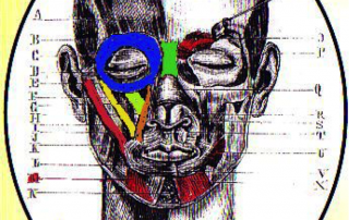 facial muscles anatomy
